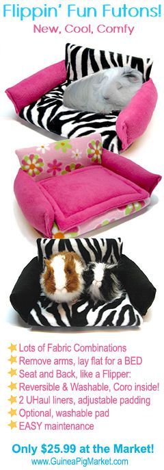 Guinea Pig Cages, Care, Photos, News, Forum, Blogs and Chat