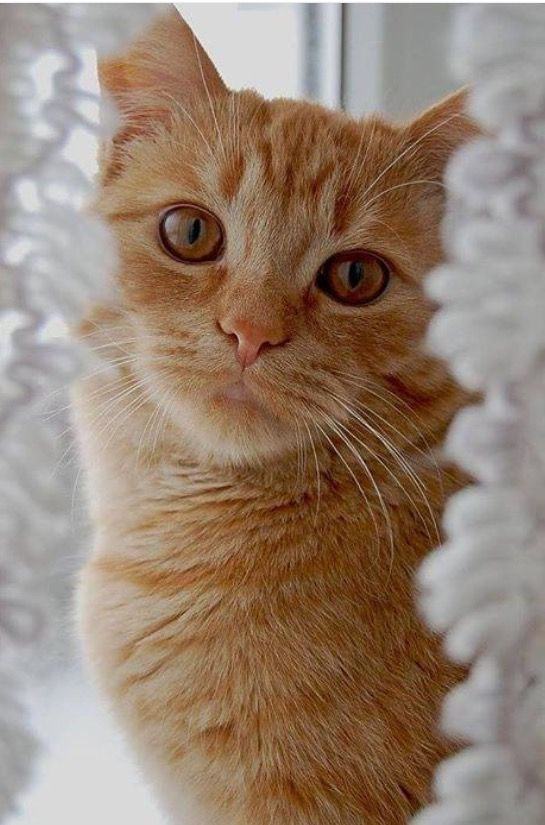 Dawnstar Rank~ Leader Age~ 24 moons Bio~ Dawnstar is a light orange tabby she-cat with dark amber eyes, Wise and fair minded, But can be fierce when it comes to protecting her clan. Mate~ None Kits~ None