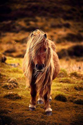 Schottland - Julia-Neubauer Fotografie