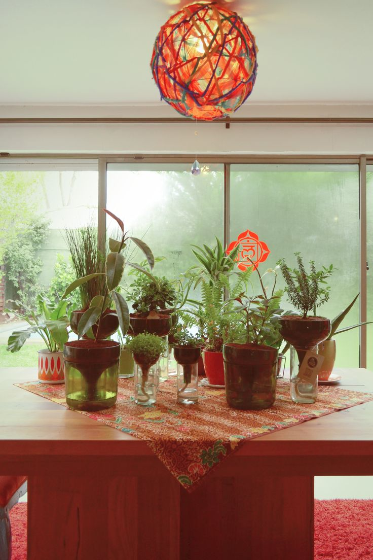 Plantas, Plantas en botellas, Diseño ecológico, Diseño sustentable, Diseño con botellas, eco diseño, plantas ornamentales, diseño de interior, Plants
