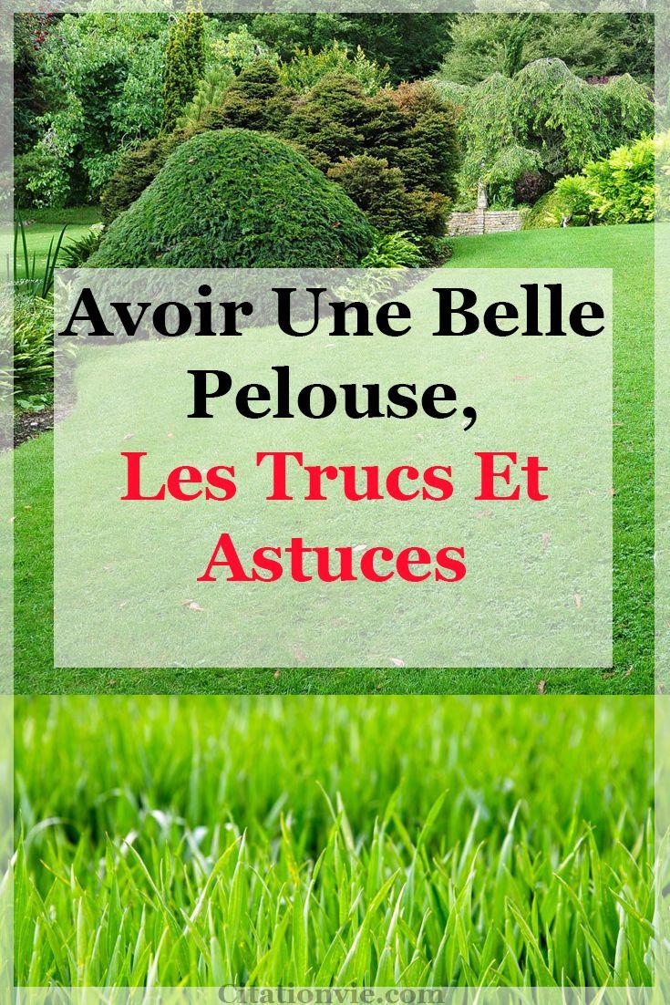 Avoir une belle pelouse, les trucs et astuces
