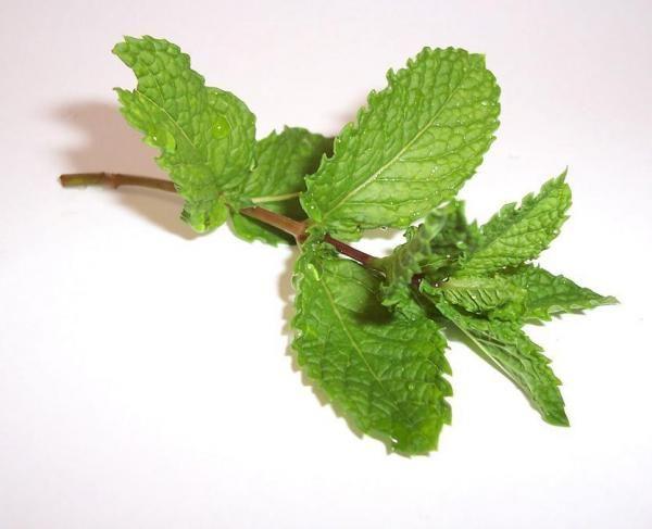 Como plantar menta. A menta é uma das ervas aromáticas mais conhecidas e utilizadas tanto para cozinhar como para remédios naturais e outros usos. Trata-se de uma planta que pode ser plantada em qualquer época do ano, po...