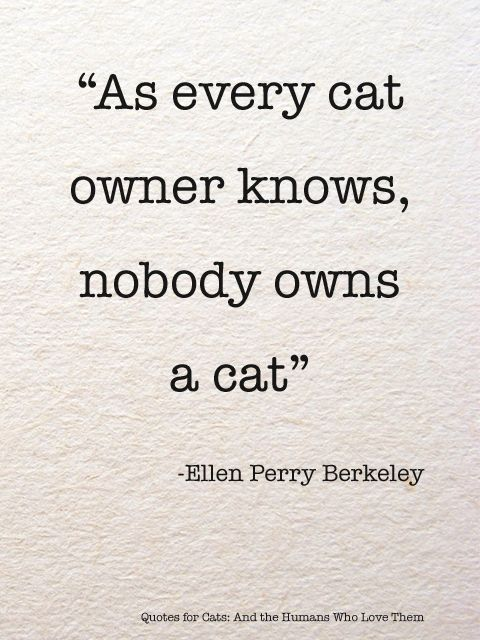 As every cat owner knows, nobody owns a cat. Ellen Perry Berkeley   #quotes #cats