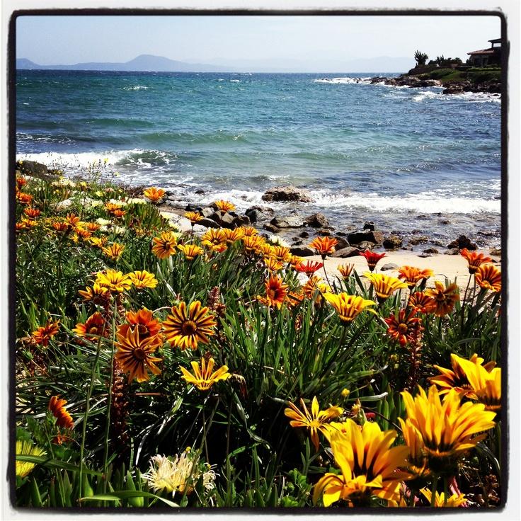 Olbia - Sardegna - Golfo Aranci - Italy Spring flowers