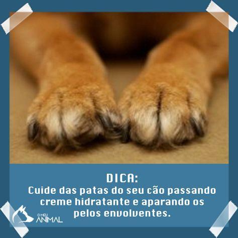 Como cuidar das patas do cão #animais #pets #gato #cão #veterinaria #peta #animaisfofos