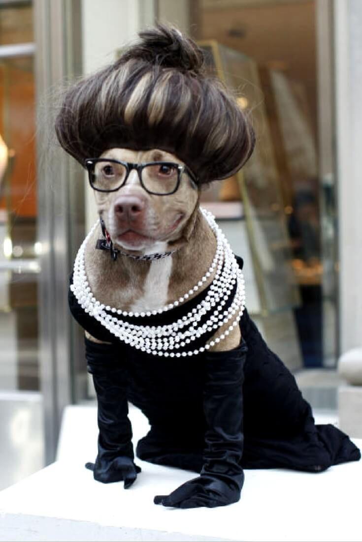 funny dog costumes - 735×1102