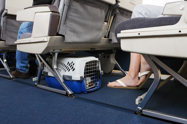 Summer air travel and pets: What you need to know