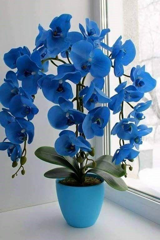 Entre Las Mas Bellas De Las Bellas Plantas Pinterest Flowers