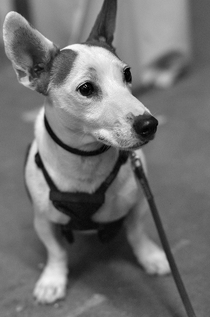 Best Dog Training Boston Ma