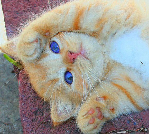 Aveces me gustaría tener ese color de ojos pero me conformo que los tenga ese gatito a más bonito