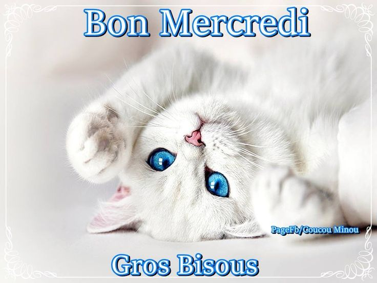 Bon Mercredi, Gros Bisous #mercredi chat chaton mignon bon mercredi