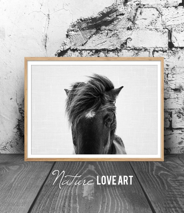 Photographie de cheval, photo noir et blanc, cheval islandais, décoration moderne, décoration animal, déco murale moderne, poster cheval de la boutique NatureLoveArt sur Etsy