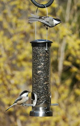 "391A Aspects Seed Small Nickel  bird feeder  11""  tall,  excluding hanger - 3/4 quart capacity 2 3/4"" diameter"