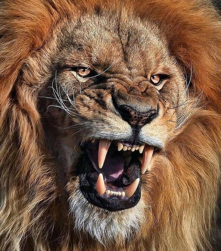 Je comprends sa colère ……..