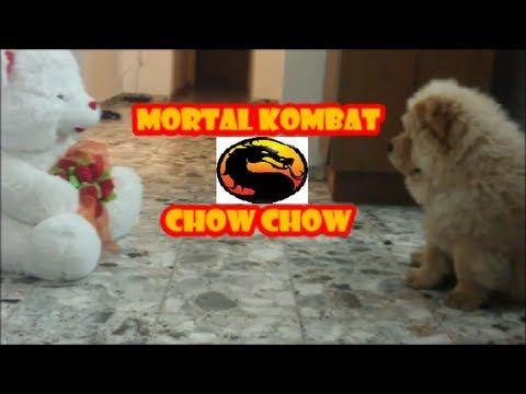 Mortal Kombat chow chow