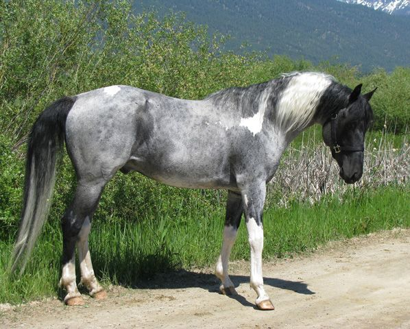 Gray Paint...so i think this is the prettiest markings i've ever seen.
