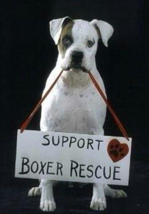 Support Boxer Rescue