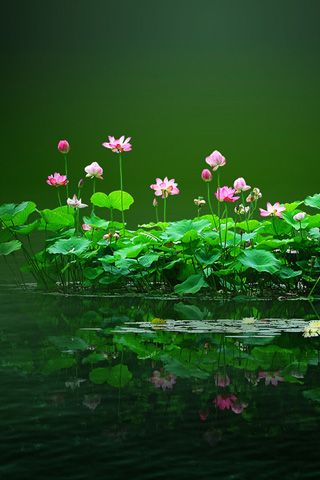 Very little grows on jagged rock. Be ground. Be crumbled, so wildflowers will come up where you are.  Rumi