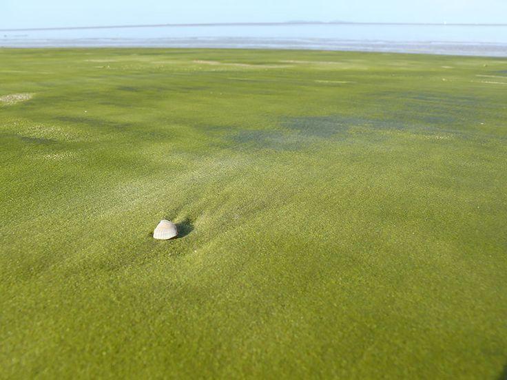 Green Sand In Kourou, French Guiana