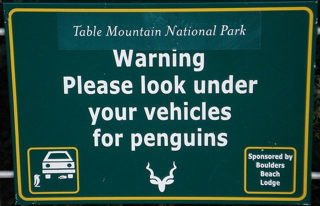 Table Mountain National Park - at Boulders Beach.