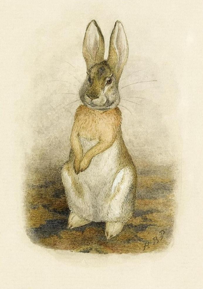Pictures Beatrix Potter