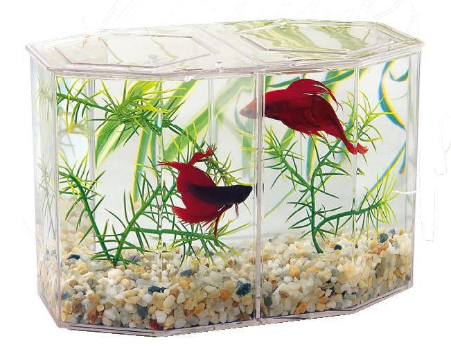Les 25 meilleures id es concernant aquarium betta sur for Manger pour poisson aquarium