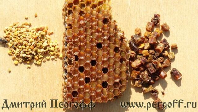 Перга и пыльца чем отличаются фото