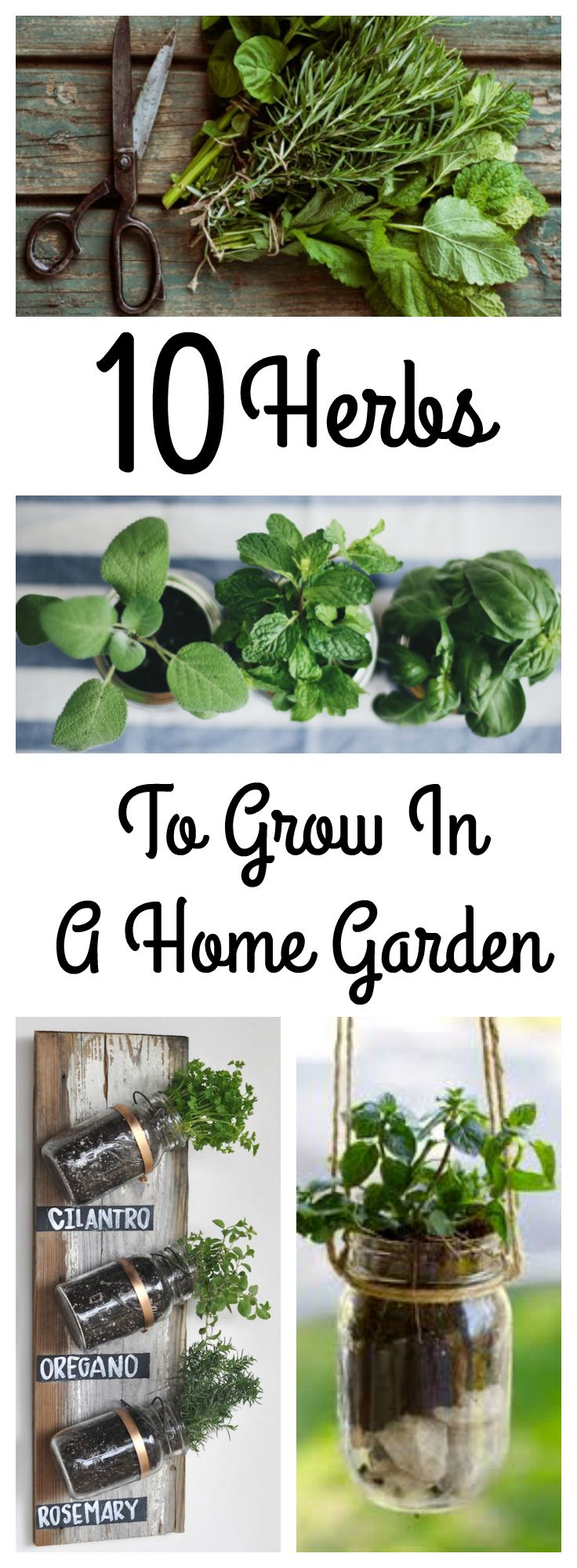 Why buy these from the store when you can grow them fresh in your own home garden? 10 easy and aromatic herbs perfect for growing yourself in any climate!