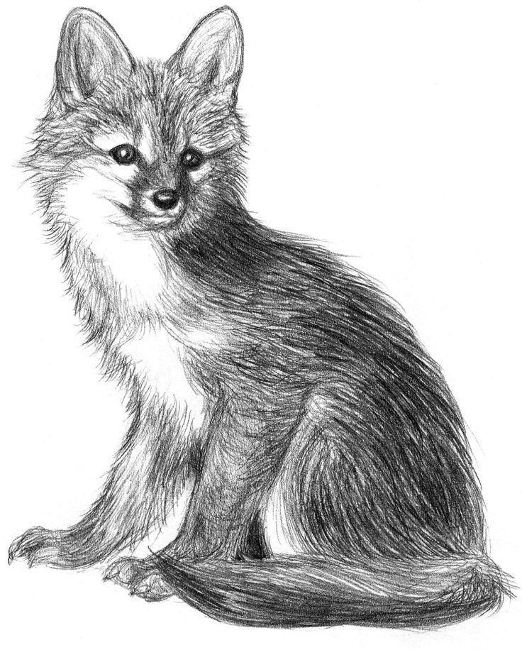 521 best graphite pencil drawings of fox images on
