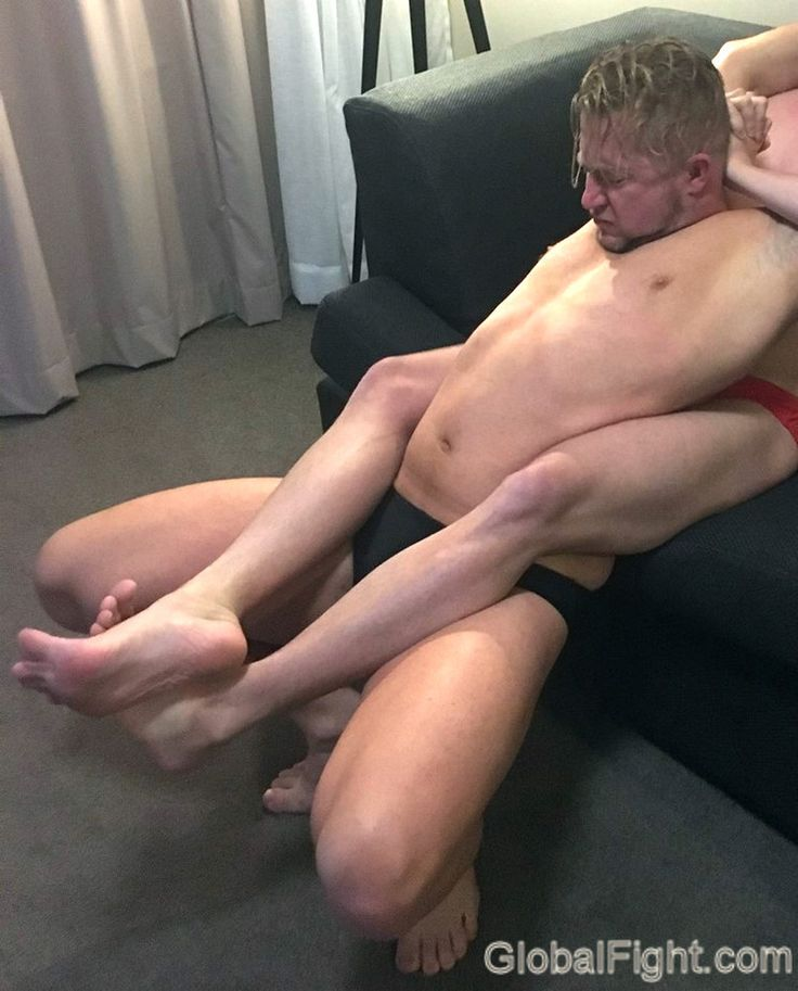 Midget bichon pup