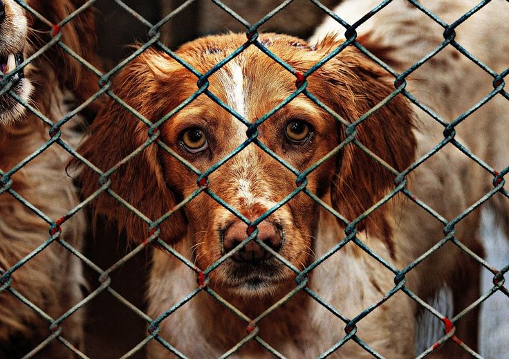 Help me stop the use of gas chamber euthanasia in the U.S