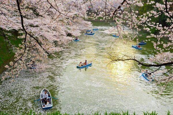 Japán. Mjógi hegy lábánál Sakura-no-Sato