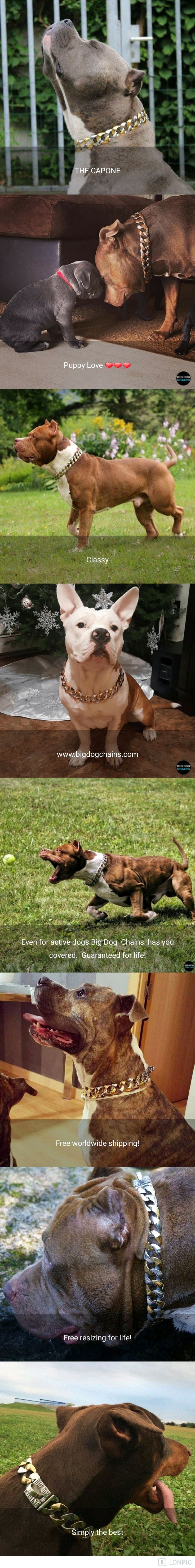 The Capone dog collar is truly unique with a stunning two tone gold and stainless steel finish. The yellow gold and white stainless steel style creates strong contrast with dog breeds with darker color fur. Click on our website to see all if our beauties!