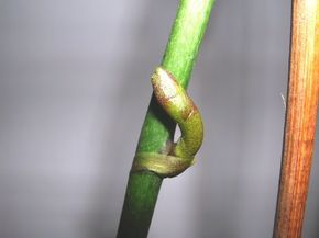 Orchidofilia: Lo sbalzo termico necessario per la fioritura