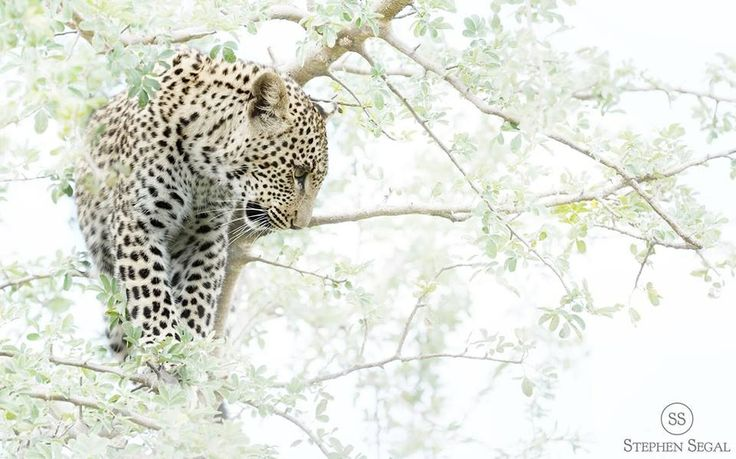 One of my photos from Tshukudu lodge
