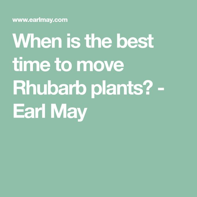 When is the best time to move Rhubarb plants? - Earl May