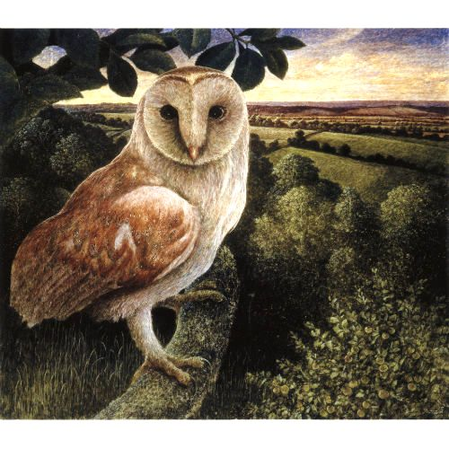 Barn Owl at High Ham ~ James Lynch