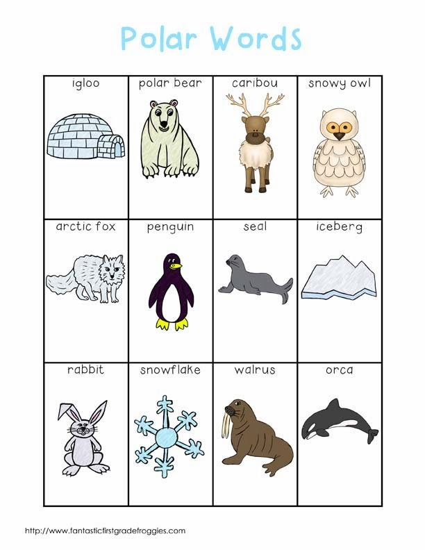 polar animals writing center words fantastic first grade froggies pinterest bingo writing. Black Bedroom Furniture Sets. Home Design Ideas