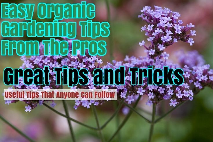 Grow A Lovely Organic Garden With These Tips – Gardening For Beginners