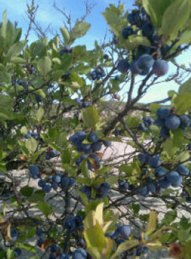 Foldaway Tote - High Bush Cranberry FWY by VIDA VIDA v47szihedo
