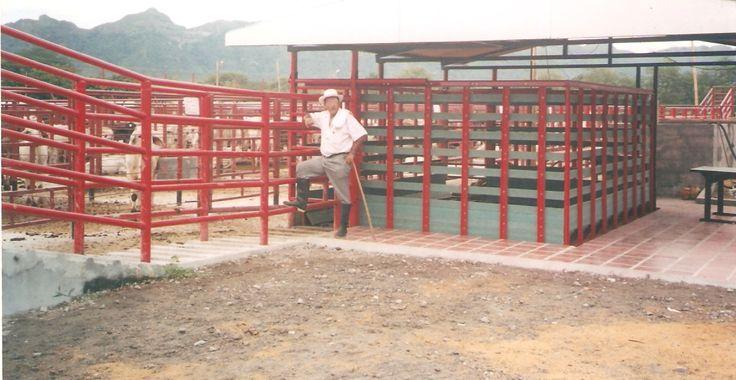 basculas ganaderas en madera plástica pesas electrónicas sistemas peso ganado balanzas para pesar ganadería bascula industriales equipamiento para medir peso  jaula electrónicas pesajes 02