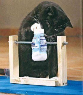 Image result for cat toy making yourself #catimages #HowToTrainCats  – ❤Katzen❤