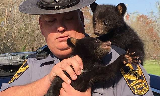 State Trooper holding bear cubs he rescued after their mother died #DailyMail