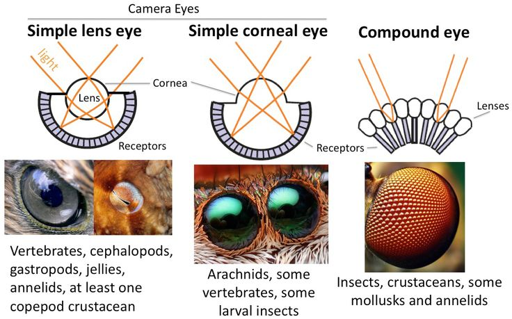 arthropods examples - Google Search