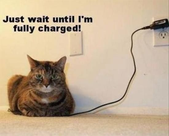 Comic kitty, cat humour. For the funniest kittens pics and quotes visit www.funnyjoke.lol