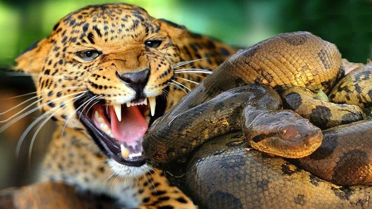 68 best images about animals on Pinterest | King cobra ...