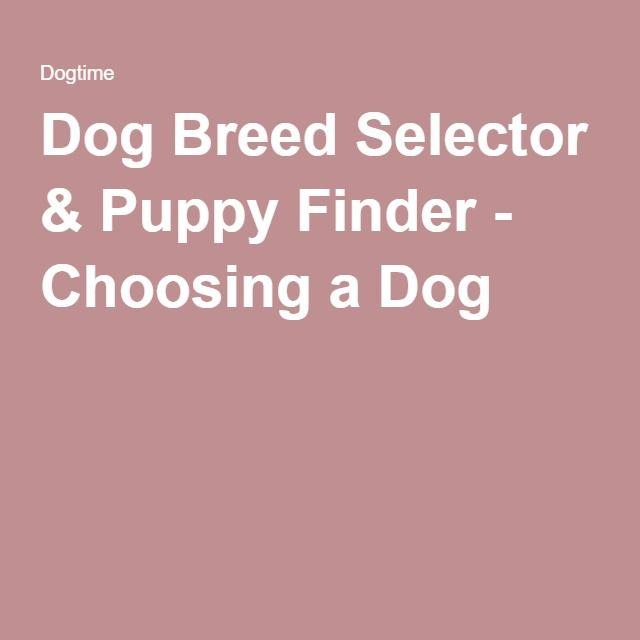 Dog Breed Selector & Puppy Finder - Choosing a Dog