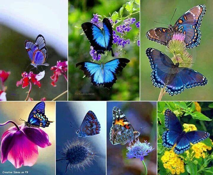 Beautiful butterflies :^)