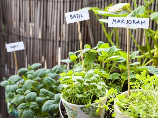 Qué Plantar En Un Huerto Urbano Guía Práctica Y Completa Huerto Urbano Como Hacer Un Huerto Huerto Ecologico