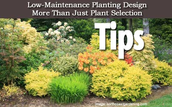 Tips On Low Maintenance Planting Design More Than Just